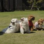 犬連れ旅行に最適!ペットに優しい街の那須塩原で遊び・食事を満喫!
