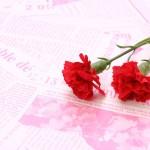母の日のカーネーションを長持ちさせる方法!花束と鉢植え別に紹介!