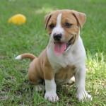 犬の外飼いで熱中症対策に効果的な飲み物とグッズとは?