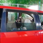 犬との旅行時わんこの車酔い対策と必要なものは?何歳から行ける?