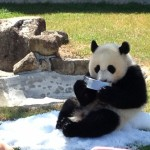 王子動物園にお弁当持ち込みは可能?駐車場の混雑と割引チケットはある?