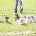 犬の暑さ対策で散歩は夏場のどの時間がいい?サマーカットは効果ある?