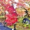京都で着物レンタルして行く紅葉デートスポットとランチのおすすめ店は?