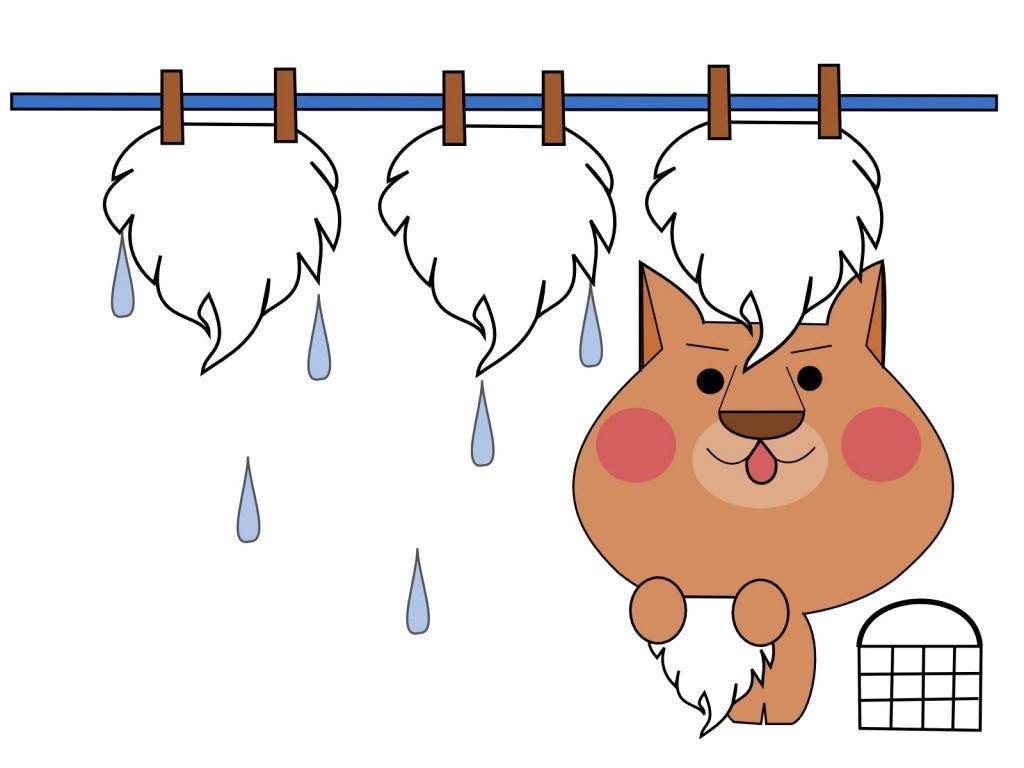 dog-sentaku